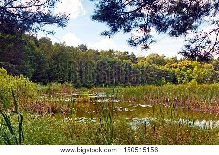 wild swamp area in Poland at sunny day