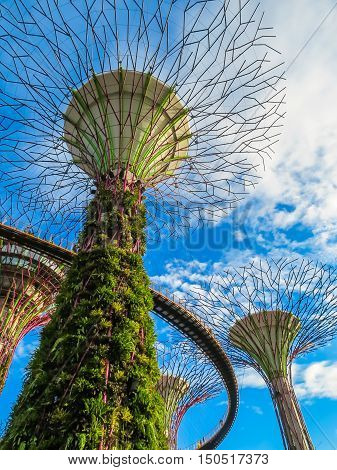 SINGAPORE, REPUBLIC OF SINGAPORE - JANUARY 09, 2014: Singapore city skyline. View of Supertree Grove, Gardens by the Bay, Singapore
