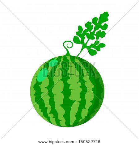 Watermelon icon cartoon. Single plant icon from the big farm, garden, agriculture collection.