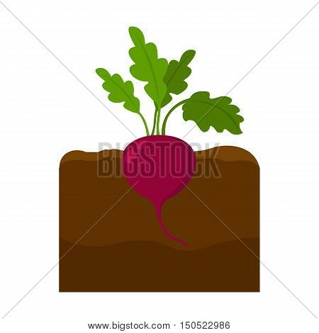 Beet icon cartoon. Single plant icon from the big farm, garden, agriculture collection.