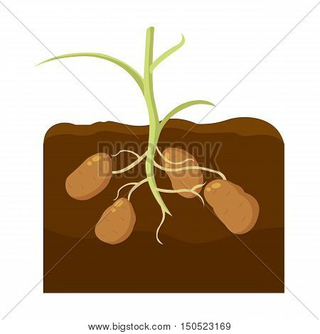 Potato icon cartoon. Single plant icon from the big farm, garden, agriculture collection.