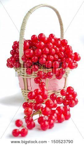 Red Berries Of Viburnum In Small Wicker Basket