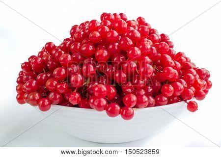 Red Berries Of Viburnum In White Plate