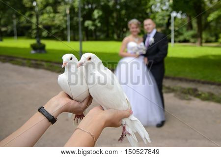 Newlyweds give white doves. Bride and groom will release doves into the sky. The bird is a symbol of love and fidelity. Wonderful wedding day.