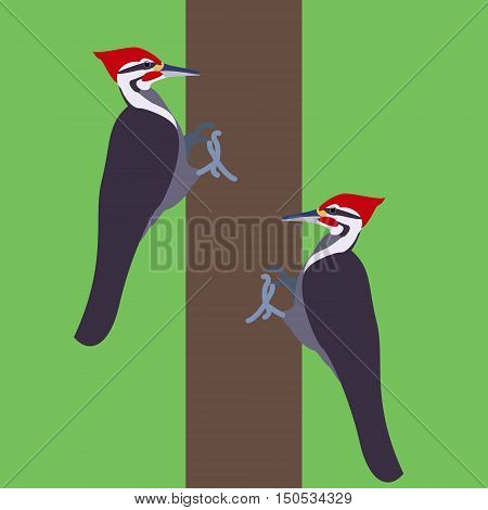 Woodpecker bird on a branch. Isolated vector illustration of a flat