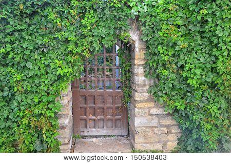 Old wooden door with overgrown bright green ivy in historic center of Tallinn Estonia