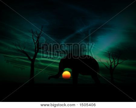 Elephant Sunrise 112