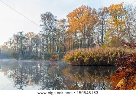 Trees and reed decorate the waterline of a pond with autumn colors on a misty morning