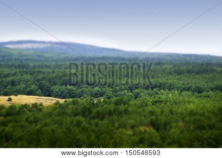 Rural crowns of trees of mixed forest in Lithuania's Nida. Miniature tilt shift lens effect.