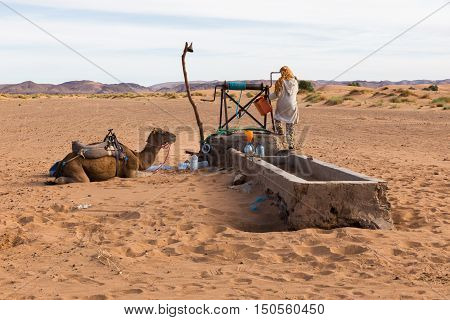 Berber man with camels at the well takes water, Morocco