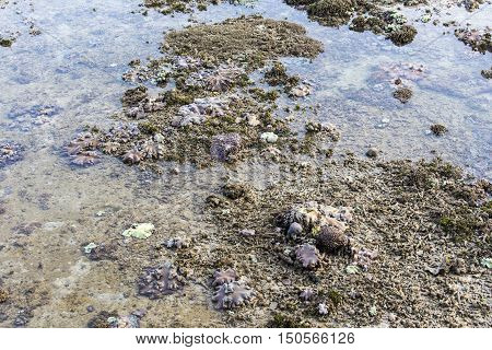 Coral Reef In Low Tide