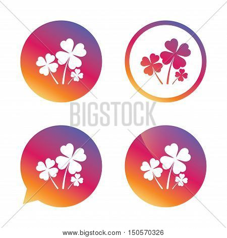 Clovers with four leaves sign icon. Saint Patrick symbol. Gradient buttons with flat icon. Speech bubble sign. Vector