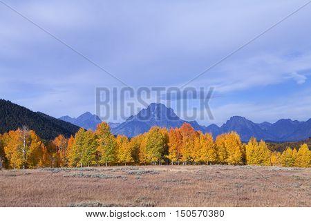 Brilliant fall colors at the Grand Teton National Park
