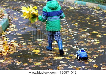 Autumn walks in the fresh air. The boy in the green jacket the boots is on the road covered with leaves pulls a toy car and is hand assembled bouquet of yellow leaves.