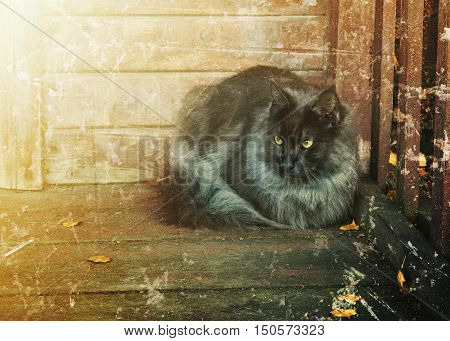 A lone black cat on the porch of rural house.