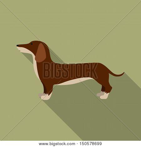 Dachshund raster illustration icon in flat design