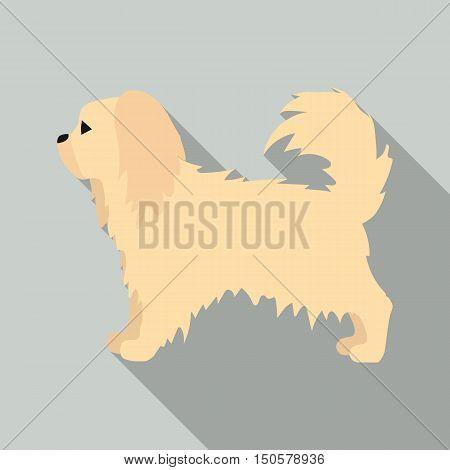 Pekingese raster illustration icon in flat design