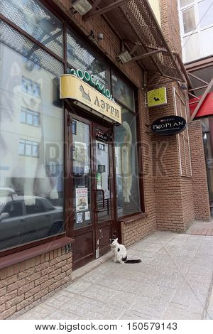 Nizhny Novgorod Russia. - June 20.2016. Domestic cat in the collar came to the pet store to Larry for a meal. He came and sat in front of the door and meows