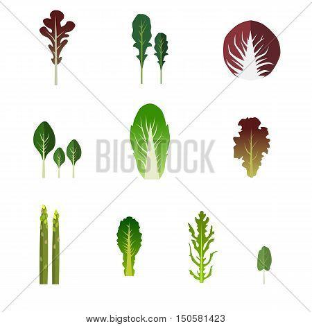 Set of salad bowl. Leafy vegetables green salad. Graphic illustration