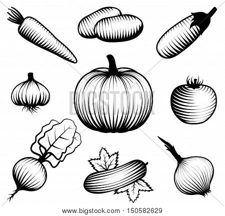 Set with isolated monocromatic drawn iconograph style vegetable symbols on blank background flat vector illustration