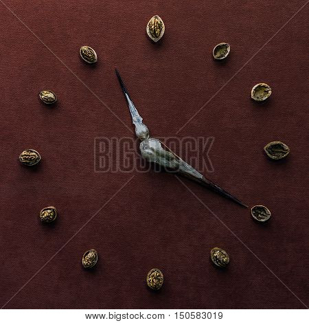 photography clock made with nuts and bird skulls