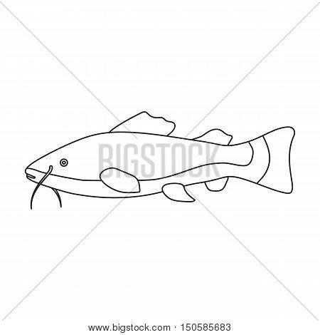 Phractocephalus hemioliopterus fish icon line. Singe aquarium fish icon