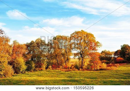 Sunset autumn outdoor view of autumn park in nice weather. Autumn nature landscape-yellowed autumn park in autumn sunny weather. Picturesque autumn view of autumn park. Autumn nature in soft sunlight