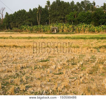 Farmland Empty Cornfield After Harvesting in Thailand.