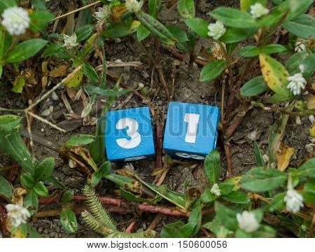 Number thirty one on grass background, Number 31