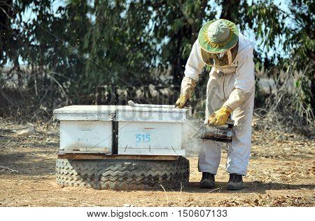 Israel's Honey Industry