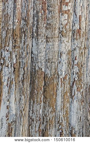 Weathered wood partially covered with peeling paint provides amazing textures