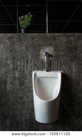 White urinals ceramic and tree in men's bathroom