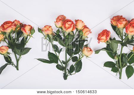 Three branches of roses close up on a white background top view flat lay