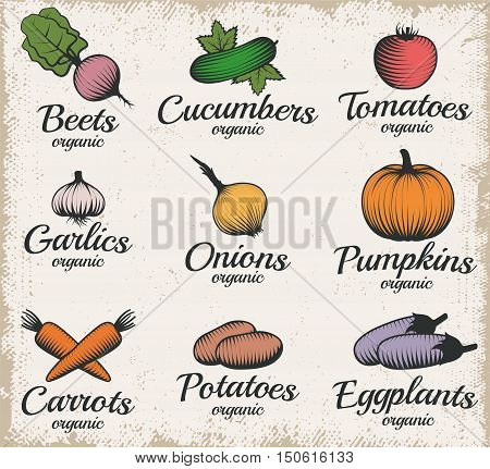 Set with colorful vintage style drawn decorative vegetable emblems with fruit symbols and captions flat vector illustration