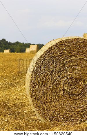 A farm field with a crop of grain / straw gathered into hay bale