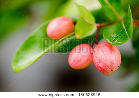 Mango Lime yawn yelllime nature organic pattern plant red white yawn yell