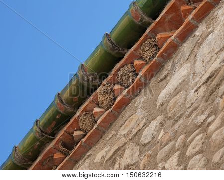 House Martin nests under the guttering of a house in Spain