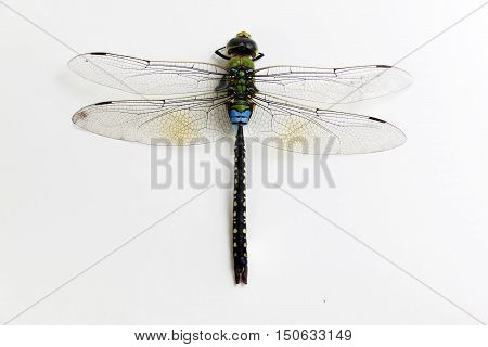 Dragonfly green and black color on white background