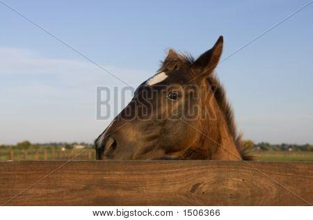 Cautious Horse