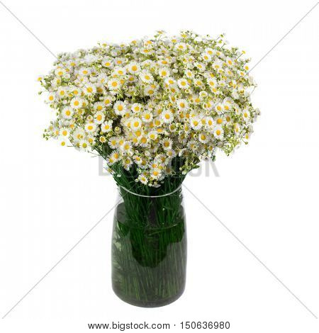 Bouquet of wild daisies in a glass vase. Isolated over white background. field of daisies in the bank.