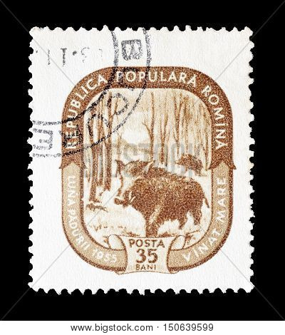 ROMANIA - CIRCA 1955 : Cancelled postage stamp printed by Romania, that shows Wild boar.