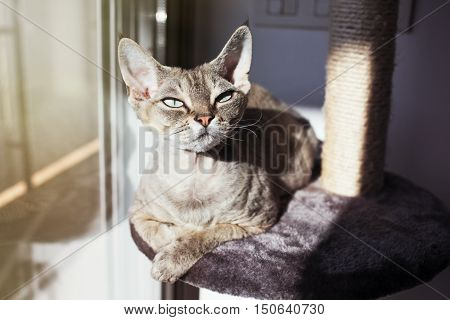 Cat loves to spending time sitting on scratching post with lounge space. Multi Platform Cat Scratcher. Cat enjoys to have sun baths. Cat furniture - scratcher
