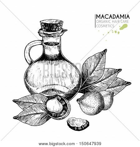 Vector set hair care ingredients. Organic hand drawn elements. Macadamia nuts leaves bottle oil. For cosmetic package shop store products spa salon wellnes program procedure skin hair care