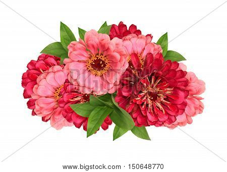 Bouquet with red and pink zinnia isolated on white background
