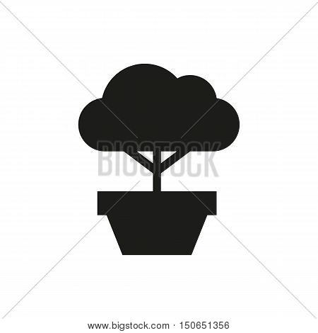 Bonsai Tree Icon On White Background