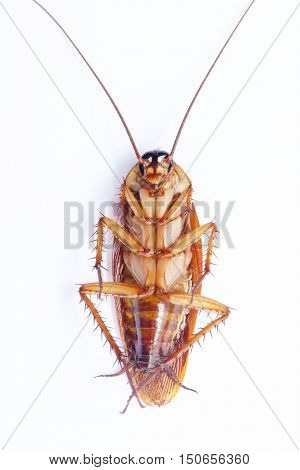 Cockroaches Can Overturn