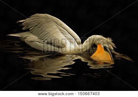 Image of the floating Dalmatian pelican - hunting pelican