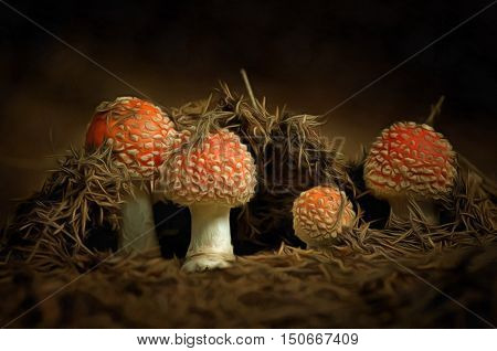 Detail of the growing red toadstool - Amanita muscaria