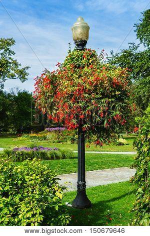 Large begonia hanging basket in the Halifax Public Gardens, Halifax, Nova Scotia.