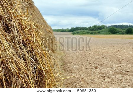 Agricultural field after harvest. Haystack close up in the foreground. Earthy field forest and cloudy sky in the background.